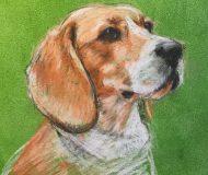 AP-CalHoy-Beagle