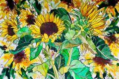 AP_susanchesterartstilllifewatercolourssunflowers